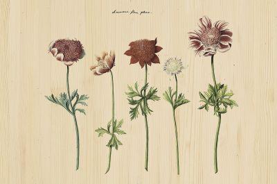 Botanical Stories 016