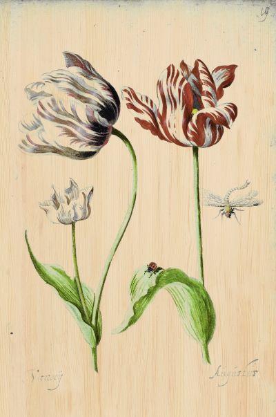 Botanical Stories 017