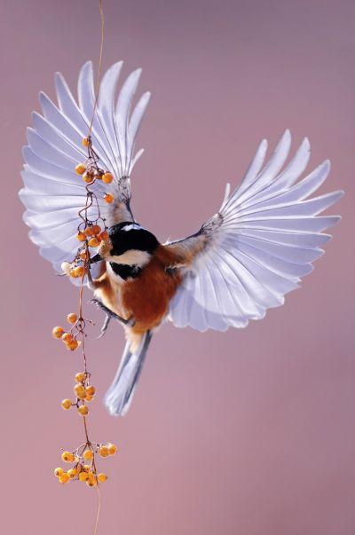 Bright Wings 020