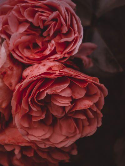 Botanical Stories 022