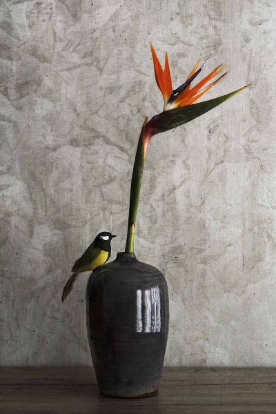 Still Life Bird