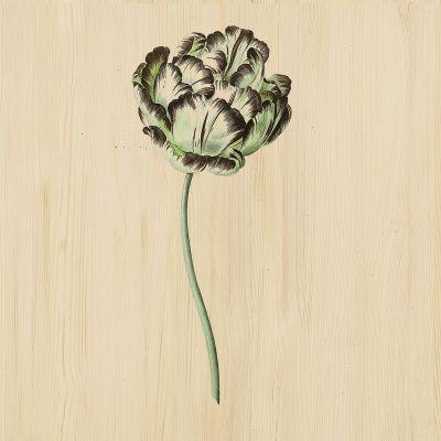 Botanical Stories 015