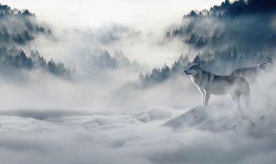 European Wildlife 006
