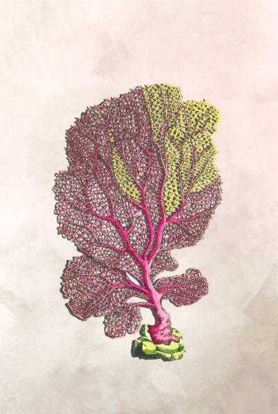 Botanical Stories 019