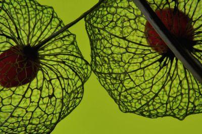 Botanical Stories 008