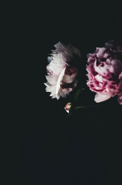 Botanical Stories 009