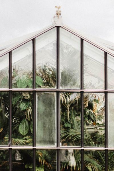 Botanical Stories 012