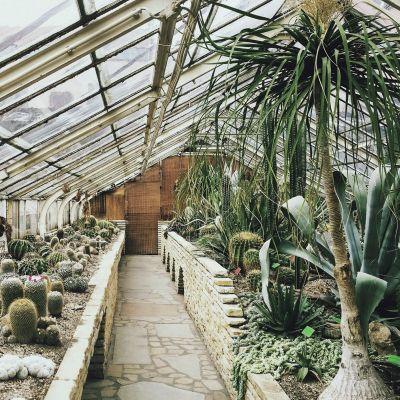 Botanical Stories 013