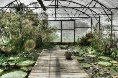 Botanical Stories 014